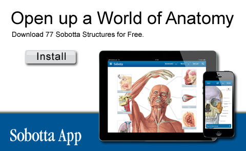 Sobotta App: Open up a World of Anatomy - Downlad 77 Sobotta Structures for Free. (Install)